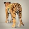 11 47 09 154 realistic bengal tiger 05 4