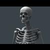 11 55 20 354 human skeleton 05 4