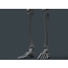 11 55 20 858 human skeleton 07 4