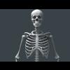 11 55 21 191 human skeleton 08 4