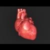 11 55 21 429 human heart 01 4