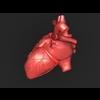 11 55 21 622 human heart 02 4