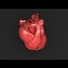 11 55 21 830 human heart 03 4