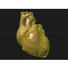 11 55 22 57 human heart 05 4