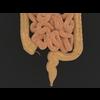 11 55 22 775 human digestive organs 05 4