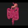 11 55 22 825 human digestive organs 06 4
