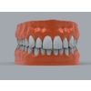 11 55 22 976 human teeth 01 4