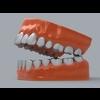 11 55 23 253 human teeth 03 4