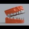 11 55 23 387 human teeth 04 4