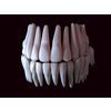 11 56 11 619 human tooth 01 4