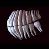 11 56 11 743 human tooth 02 4