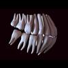 11 56 11 935 human tooth 03 4