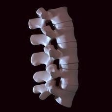 Human lumbar 3D Model