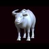 12 08 17 392 bull 02 05 4