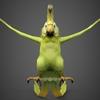 12 08 48 658 fantasy parrot 02 4