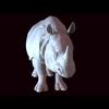 12 10 57 942 rhino 03 4