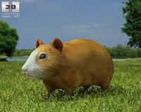 Hamster (Cricetinae) 3D Model