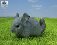 Chinchilla (Chinchilla) 3D Model