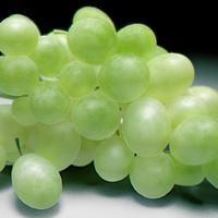Grapesfinalnew cover