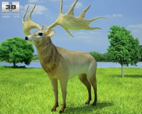 Irish Elk (Megaloceros Giganteus) 3D Model