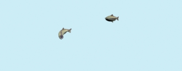 Fish1 wide