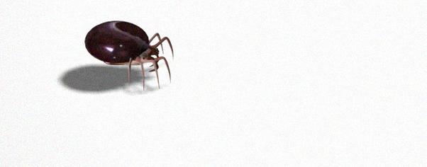Spiderz2 wide