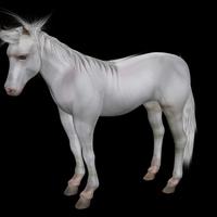 Horse rig hair37 cover