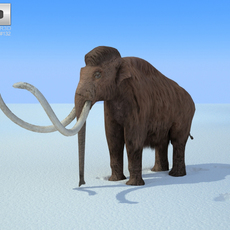 Mammoth (Mammuthus) 3D Model