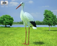 White Stork (Ciconia Ciconia) 3D Model