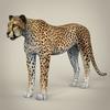 14 28 12 264 realistic cheetah 01 4