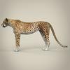 14 28 13 378 realistic cheetah 04 4