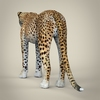 14 28 13 684 realistic cheetah 05 4