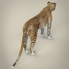 14 28 13 947 realistic cheetah 06 4