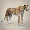 14 28 14 296 realistic cheetah 07 4