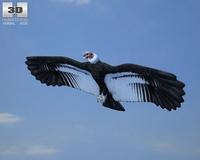 Andean Condor (Vultur Gryphus) 3D Model