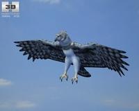 Harpy Eagle (Harpia Harpyja) 3D Model