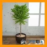 interior_Plant_3 3D Model