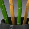 15 40 19 406 bamboo 05 4