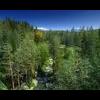 15 42 19 418 forest sence 2 1 4