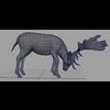 16 01 07 827 deer 5 4