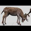 16 01 09 832 deer 2 4