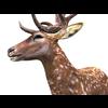 16 01 10 491 deer 1 4