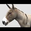 16 01 14 235 donkey 1 4