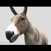 16 01 14 859 donkey 3 4