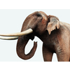 16 01 18 193 elephant 1 4