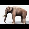 16 01 18 599 elephant 2 4