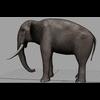 16 01 19 18 elephant 3 4