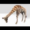 16 01 23 555 giraffe 3 4