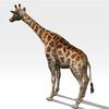 16 01 23 952 giraffe 4 4