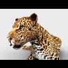 16 01 39 604 leopard 5 4